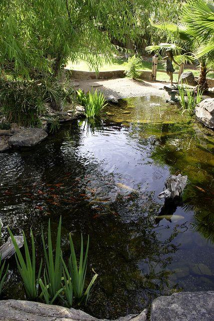 69 best ponds images on pinterest backyard ponds garden for Coy pond accessories