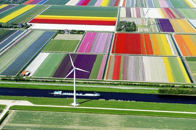Fotografía aérea de campos de tulipanes en Holanda