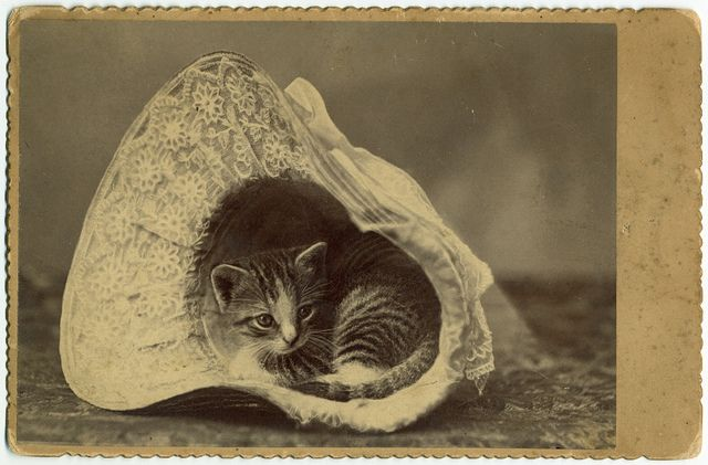 bonnet kitten: House Collection, Thoughts Catalog, George Eastman House, Vintage Cats, Bonnets, Baby Animal, Kitty, Photo, Kittens Nestl