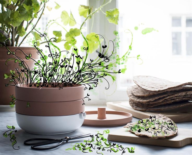 Enjoy a taste of Spring. Delicious, healthy bean sprouts, anytime. Stylish, 2-tier terracotta ANVÄNDBAR sprouter. Rustic elegance in your kitchen. Reduce wastful packaging. And start to live a little kinder. #Livealittlekinder #IKEAcollections #ANVÄNDBAR #IKEA #greenhomes #sprouter