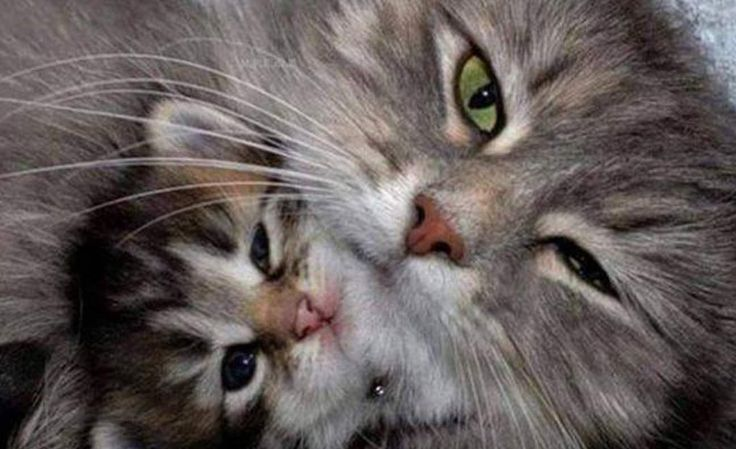 Mama and Baby - Click to see loads of great pictures of cats and kittens to brighten your day