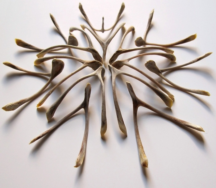 In Honor Of Turkey Day, 18 Works of Art Inspired By The Wishbone.