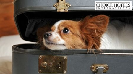 Vacation Photo Contest 2012 | It's Contest Time! Submit Your Dog's Vacation Photo to Win ...