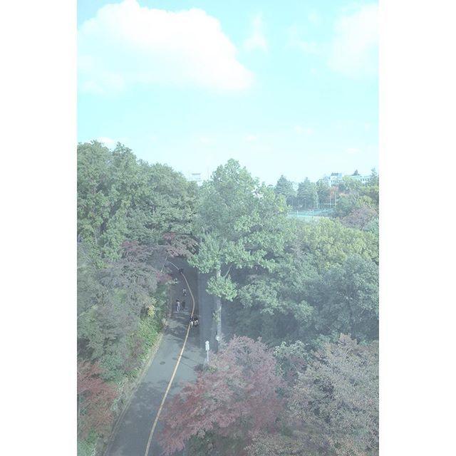 【s1g.neo_509】さんのInstagramをピンしています。 《山の中かなと思ったら玉学だった。 夏と秋になると山に行きたくなるけど、夏は農大厚木、秋は玉学に行ったから良いやカオス。 環境もアクセスも良くて学生も(一見チャラそうな人も)誠実という良いイメージが強い #TOKYO #東京 #町田 #玉学 #学校 #大学 #校庭 #森 #山 #自然 #木 #紅葉 #秋 #空 #雲 #玉川大学 #デイドリーム #スナップ #学園祭 #日常 #神奈川 #school #sky #clouds #fall #snap #コスモス祭 #玉学ラリー難所のカーブ》
