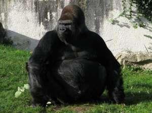 Gorillafiilis on alkukantainen onnistumisen tunne, joka kaikkien pitäisi päästä kokemaan ainakin kertaalleen.