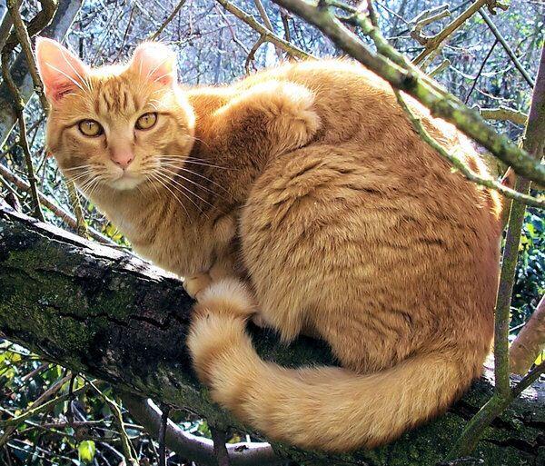Warrior Cats Graytail