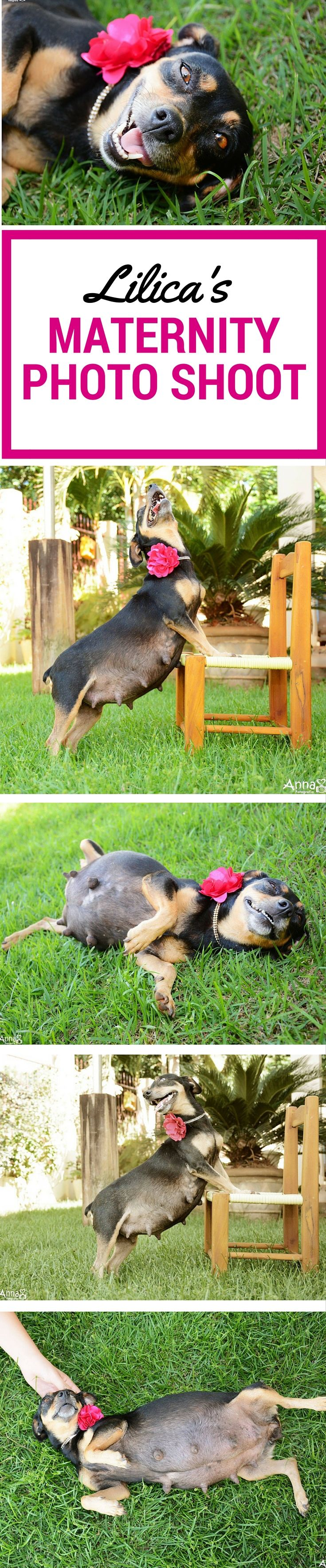Rescue dog does epic and beautiful maternity photo shoot.