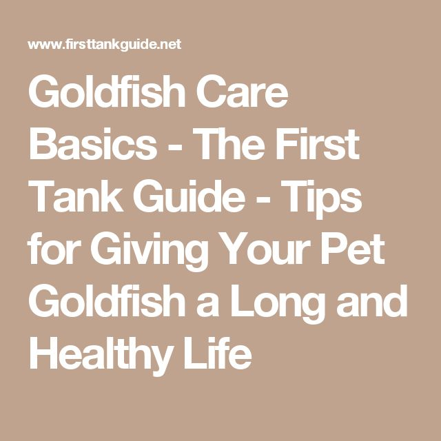 Goldfish Care Basics - The First Tank Guide - Tips for Giving Your Pet Goldfish a Long and Healthy Life