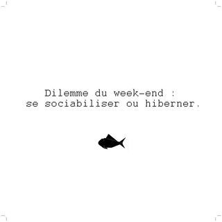 Bon week-end les sirènes des mers du sud. #dilemme #citation #weekend #goldfishgangblog #frenchiesgb