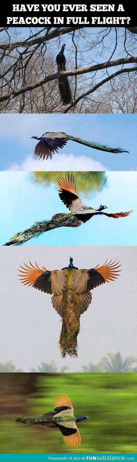 I had no idea they could even fly... Whoa