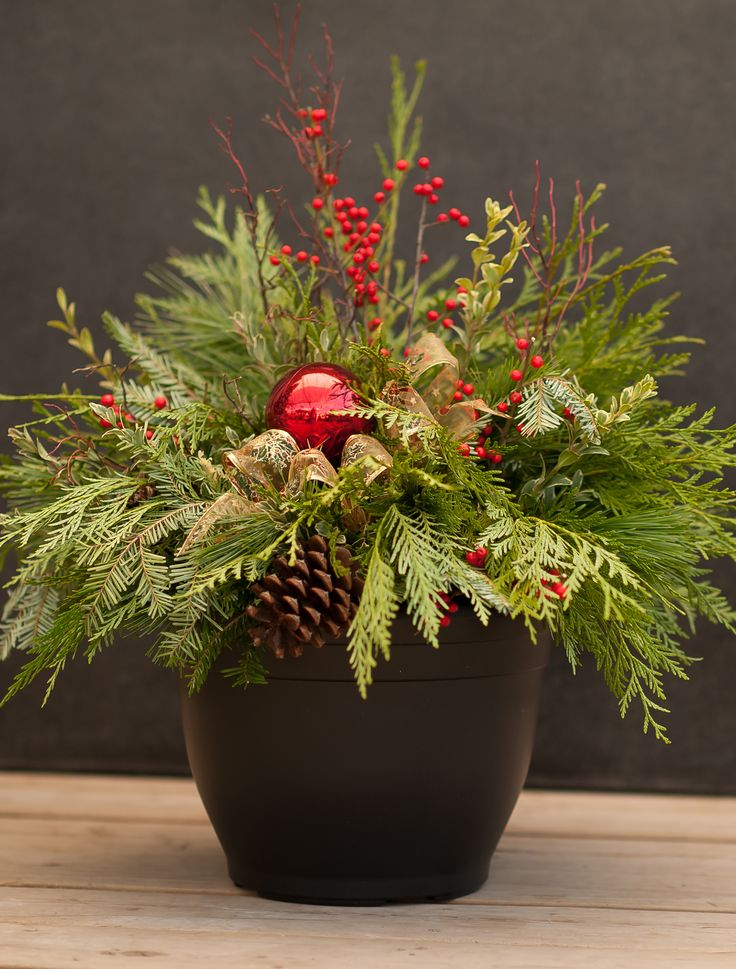 Nov 30 -  Join Minna in the studio and learn all the secrets of creating a beautiful 14″ planter. Jolly and festive, this is the essential winter accent for your patio or entryway. Wow your friends and neighbours by letting them know you created it yourself! At West Coast Gardens in Surrey BC #surrey #surreybc #vancouver #Portmoody #whiterock #events #christmas