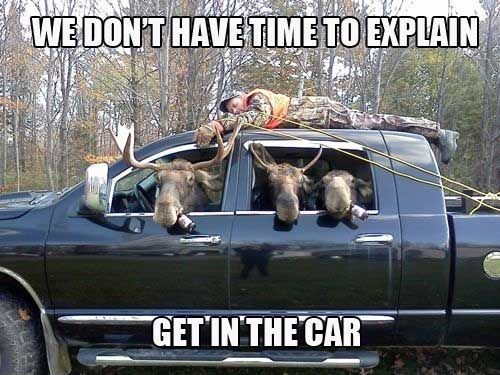 Get in the carThe Maine, Funny Pics, Cars, Funny Jokes, Hunting Seasons, Funny Animal, Maine Street, Deer, Animal Memes