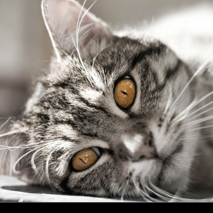 How does a cat greet the otherr animals in the field? A: 'Pleased to eat mearr.'…