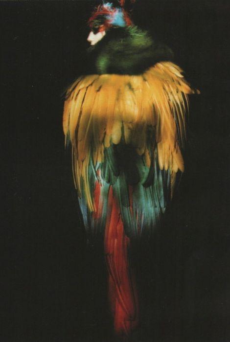 Bird of Paradise,1997 by Paolo Roversi   Paolo roversi