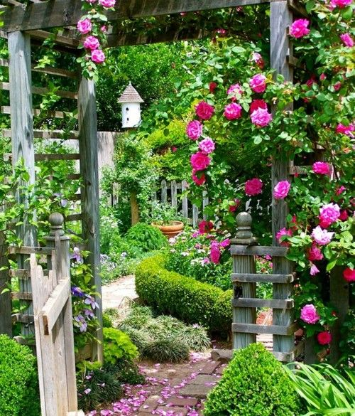 pink climbing roses, boxwood hedges wooden gate and bird house