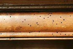 <p>Os cupins (ou térmitas) são insectos conhecidos por nós pelo hábito de se alimentarem preferencialmente de celulose, atacando papéis, livros, estruturas de madeira, ou qualquer outro material derivado deste composto. Uma fórmula caseira e eficiente para matar cupins : Ingredientes: 1 litro de gasolina 200g de naftalina. Preparação e utilização …</p>