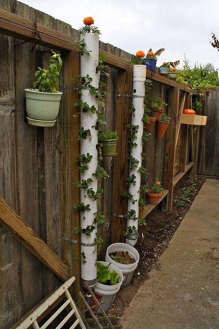 gouttières percées pour faire pousser des fraisiers