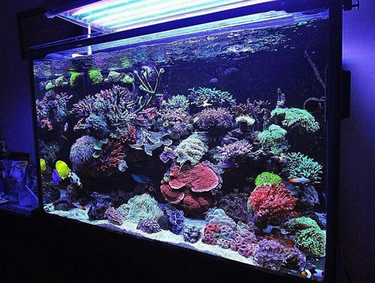 the saltwater aquarium systems and design considerations essay Abstract the sections in this article are: 1 techniques in the study of locomotion 11 history 12 diversity and natural history 13 kinematic techniques.