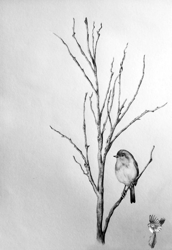 #ElementEdenArtSearch a Robin For Laura A3 Graphite and Charcoal