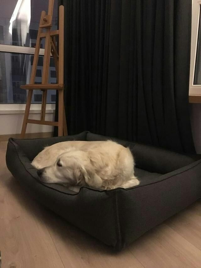 Large Dog Bed With Machine Washable Cover Orthopedic Older