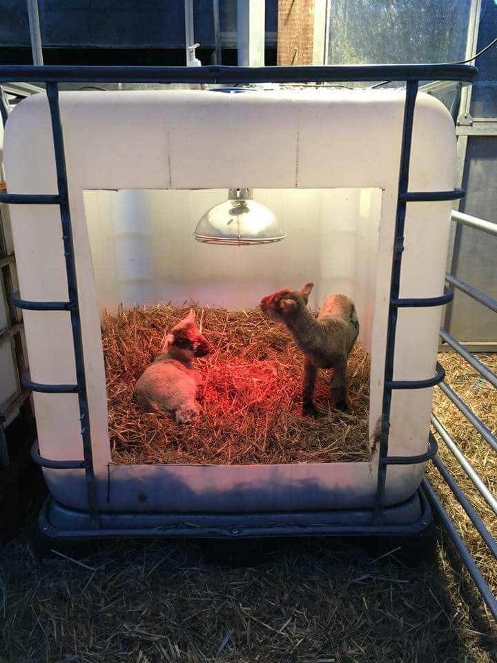 Verwandte Website Verfolgt Ziegenzucht Hobbyfarmen Goat Raising