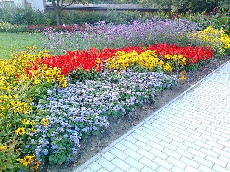 Flowers (8/13)