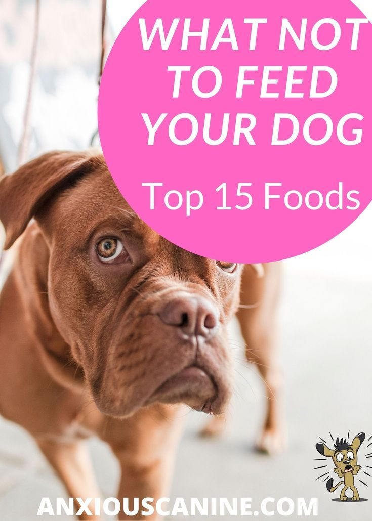 What Not To Feed A Dog What Every Pet Parent Should Know By
