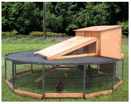 Re purposed trampoline into chicken coop a fathers for Old farm chicken coops