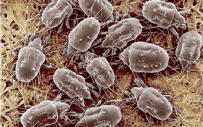 #Антибактериальная чистка и профилактика болезнетворных бактерий  #Ковры и ковровые покрытия бесспорно вносят в нашу жизнь уют и теплоту. Изначально ковры использовались именно для создания тепла, чтобы ноги не мерзли на холодном полу. В наше время ковры выполняют сразу несколько функций. Ковры располагаются в гостиных, обеденных залах, кухнях и коридорах. В этих местах чаще всего ступает нога человека, от этого ковер загрязняется, впитывает в себя неприятные запахи и становится домом для…