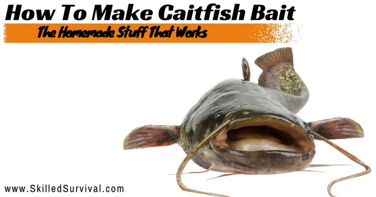25 unique catfish bait ideas on pinterest homemade for How to make a fish trap for big fish