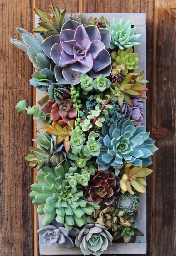PLANTED 15.5″ x 7″ Custom Rectangle Succulent Vertical Garden Made to order