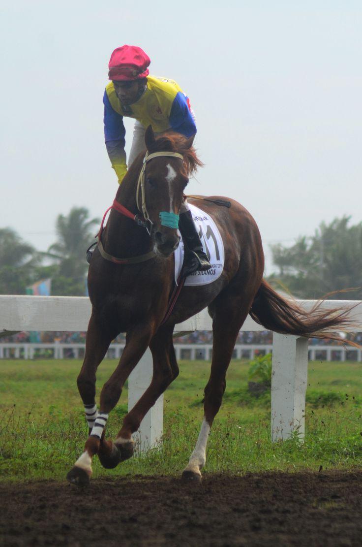 Pada cabor Berkuda Kelas A 2200 Meter #PON2016 (28/09), Suhendar (Jabar) berhasil meraih medali emas, perak diraih J. Turangan (Jateng) dan medali perunggu diraih R. Nugraha asal Jawa Barat.