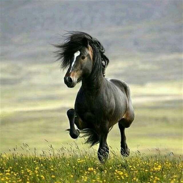 horse horse black beautiful running wild sky