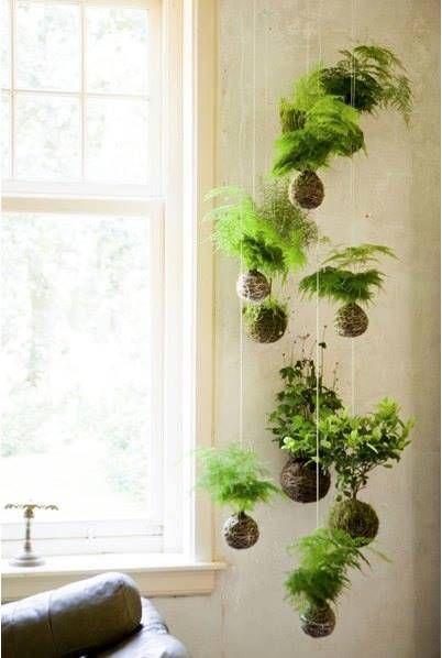 kokedama moss garden - Google Search