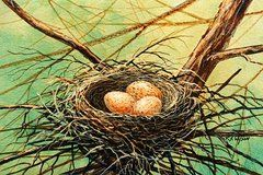 Birds Nest Paintings - Brown Speckled Eggs by Frank Wilson