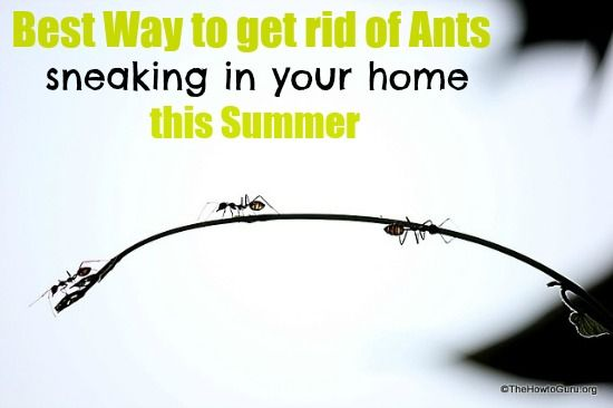 Best Way to Get Rid of Ants