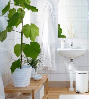 Piante da appartamento: quali tenere in bagno