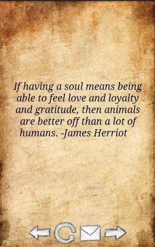 """If having a soul means being able to feel love and loyalty and gratitude, then animals are better off than a lot of humans."" - James Herriot. Love animals!"