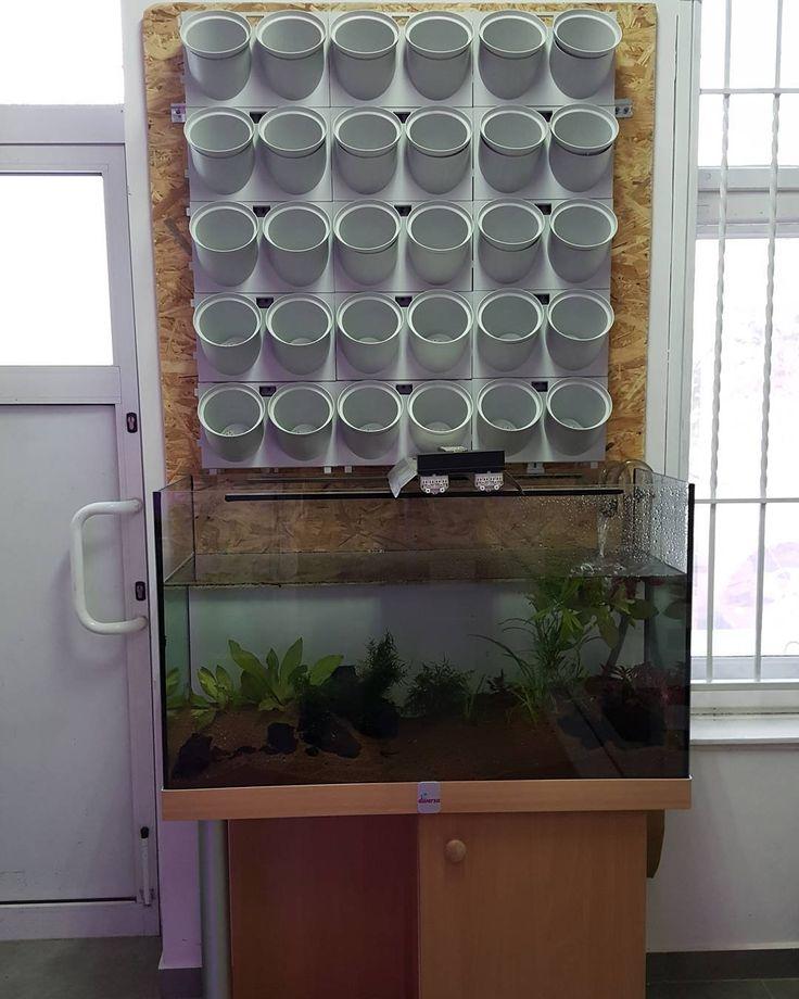 #AcoTo  #akwarium i #ogród #wertykalny . A co z tego będzie ? A to sie niedługo przekonacie . Ale będzie bardzo #zdrowe #przyszne #praktyczne #naturalne #piękne #desain #owocowo #ekonomicznie #ekologiczne  Tak Tak i każdy będzie mógł mieć to w #swoim #domu #kuchni #salonie #Hydro #ledgrow #plant #growth #aquagarden #aqua #aquaponics #hydroponics #urbanfarm #homeFarm #Vega #vegalife