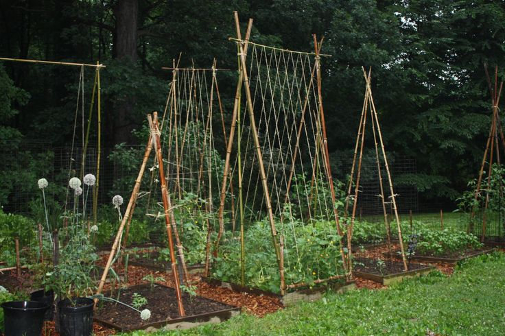 Bamboo bean trellis, thinking about painting the bamboo bright colors