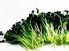 KIEŁKI - doceń zdrowotne i smakowe walory kiełków roślinnych
