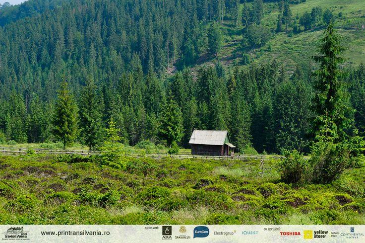Wild Transylvania