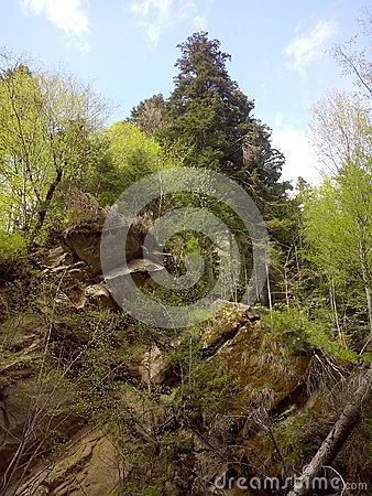 A fir grown on top of a rock, surrounded by other trees, nearby Casoca waterfall