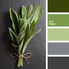 38 Best Paint Color Schemes Celery Green Images On