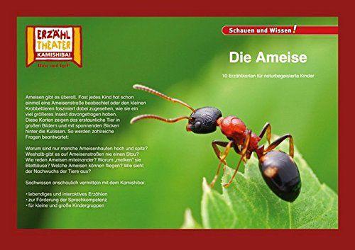 Kamishibai Die Ameise 10 Fotobildkarten F R Das Erz Hltheater