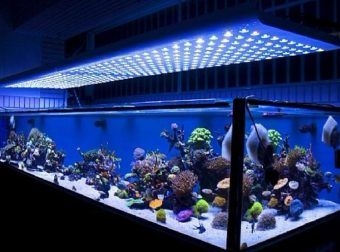 We are #London most reputed rental #aquarium provider! Visit our website to see our range.