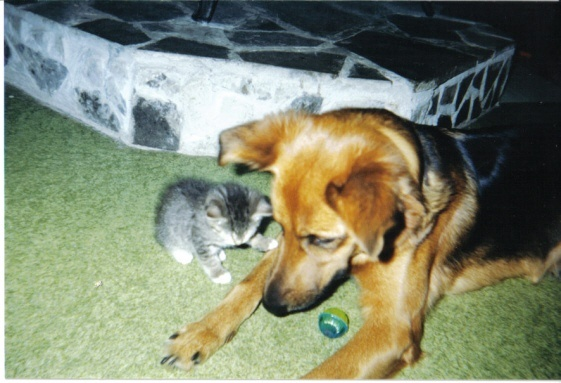 my princess whom i miss and one of her little kittens she loved to play mom too. she was the best dog. miss u girl....