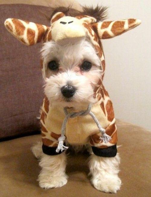 I want it