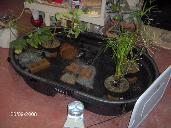56 best pond ideas images on pinterest Diy indoor turtle pond