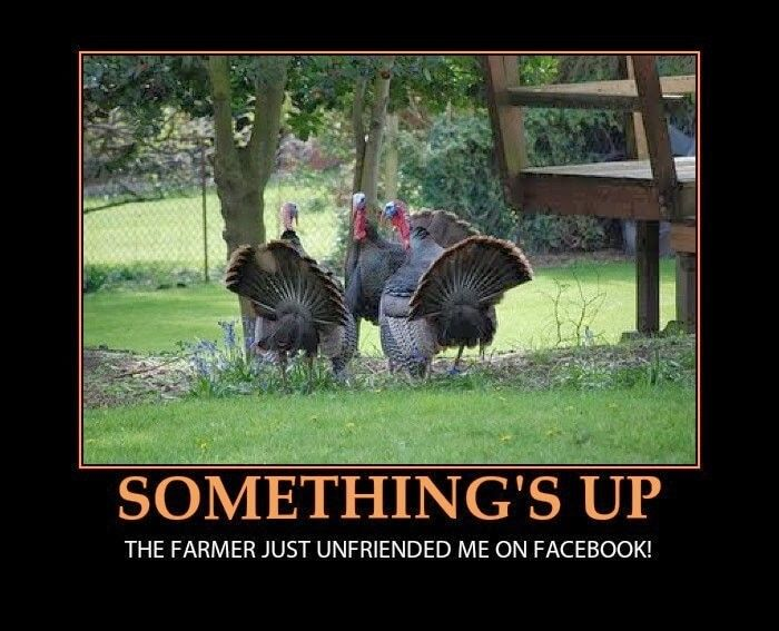 Funny Thanksgiving Images Funny Thanksgiving Memes Happy Thanksgiving Memes Happy Thanksgiving Pictures